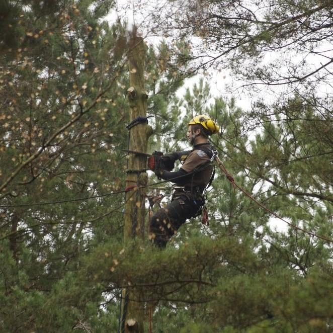 pavojingų medžių pjovimas dalimis vilniuje alpinistai bebriukai